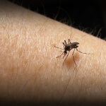 Zika Comes to the US