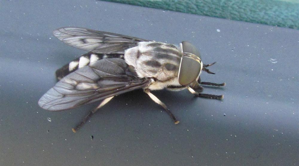 fly-1